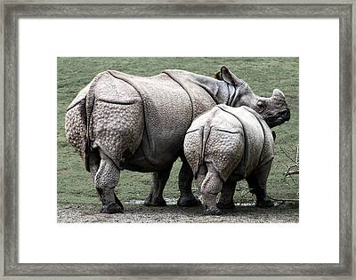 Rhinoceros Mother And Calf In Wild Framed Print by Daniel Hagerman