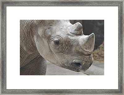 Rhinoceros Framed Print