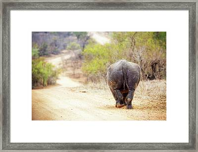 Rhinocerous Walking Away Down Road Framed Print