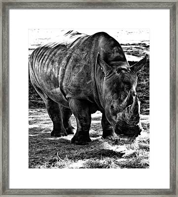 Rhinoplasty Framed Print by Sarita Rampersad