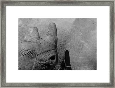Rhinos Framed Print
