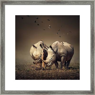 Rhino's With Birds Framed Print