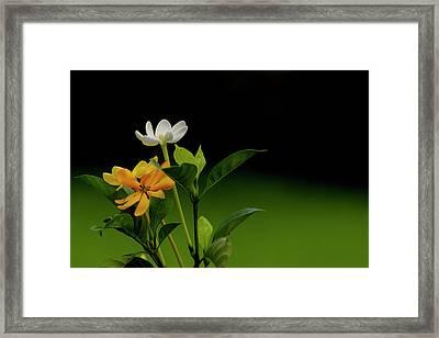 Rhoda's Kula Gardenia Framed Print
