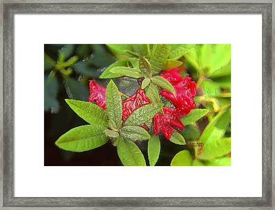 Rhodendron In 3d Framed Print by Garland Johnson
