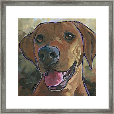 Rhodesian Ridgeback Framed Print by Nadi Spencer