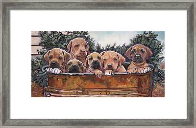 Rhodesian Ridgeback Puppies Framed Print
