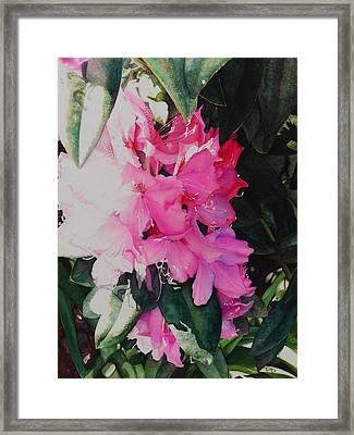 Rhodies Framed Print