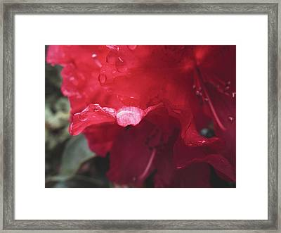 Rhododendron #2 - May 2015 Framed Print