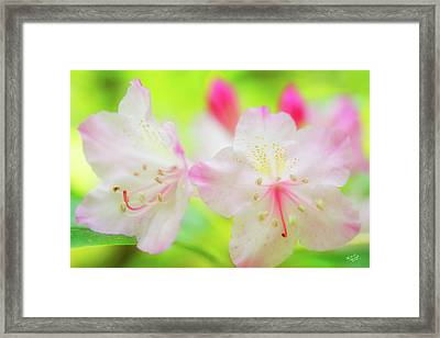 Rhododendron 5 Framed Print