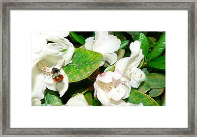 Framed Print featuring the photograph Rhododendron And Bee by Larry Keahey