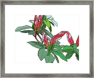 Rhododendron Buds Framed Print