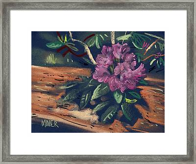 Rhododendron Framed Print by Donald Maier