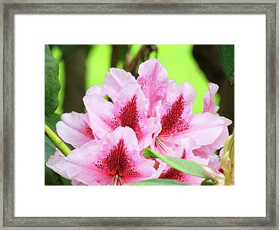 Rhododendron Floral Art Prints Rhodies Flowers Canvas Baslee Troutman Framed Print