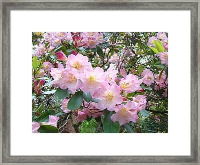 Rhododendron Flowers Garden Art Prints Floral Baslee Troutman Framed Print