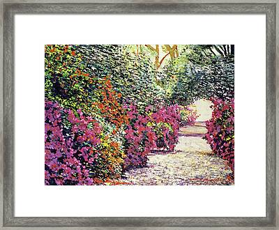 Rhododendron Pathway Exeter Gardnes Framed Print