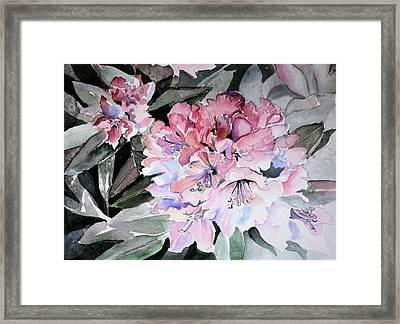 Rhododendron Rose Framed Print