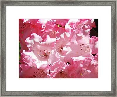 Rhododendrons Floral Art Prints Pink Rhodies Baslee Troutman Framed Print
