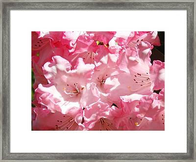 Rhododendrons Flowers Art Print Pink Rhodies Baslee Troutman Framed Print