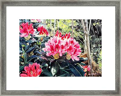 Rhododendrons Of British Properties Framed Print