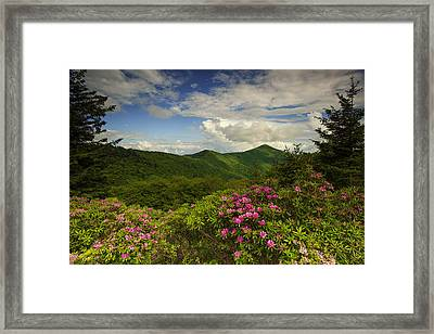 Rhododendrons On The Blue Ridge Parkway Framed Print