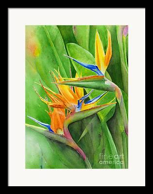 Tropical Birds Of Hawaii Framed Prints