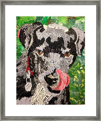 Rhubarb - Black Lab Framed Print by Sandy Karsten