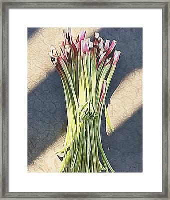 Rhubarb Framed Print by Michele Meehl