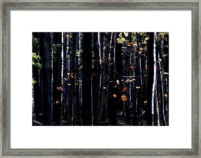 Framed Print featuring the photograph Rhythm Of Leaves Falling by Bruce Patrick Smith