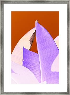 Ribbed In Violet Framed Print by Florene Welebny