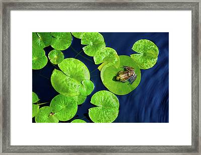 Framed Print featuring the photograph Ribbit by Greg Fortier