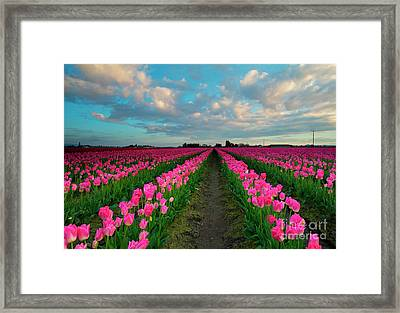 Ribbons Of Pink Framed Print