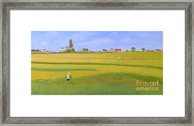 Rice Field In Northern Vietnam Framed Print by Thi Nguyen