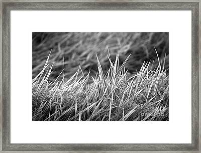 Rice Field Japan Framed Print by Arni Katz