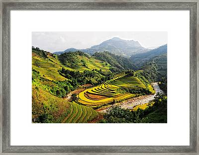 Rice Fields On Terraced In Vietnam Framed Print by Phuong Duy Nguyen