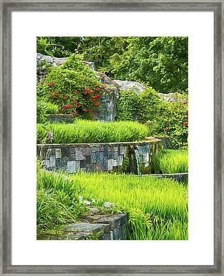 Rice Garden Framed Print