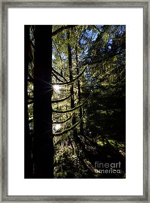 Rice Lake Dramatic Trees Framed Print by Terry Elniski