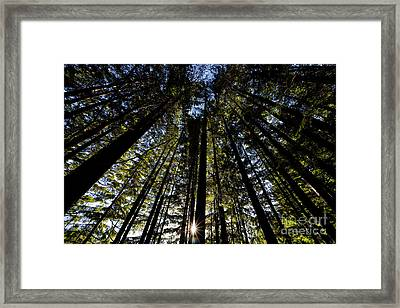 Rice Lake Tall Trees With Sun Framed Print by Terry Elniski