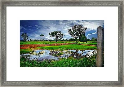 Rice Paddy View Framed Print