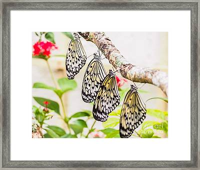 Rice Paper Butterflies Framed Print