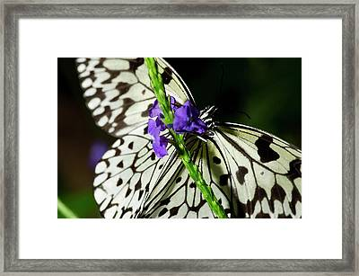 Rice Paper Butterfly Framed Print