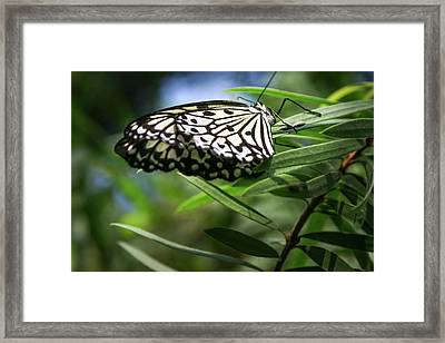 Rice Paper Butterfly - Framed Print