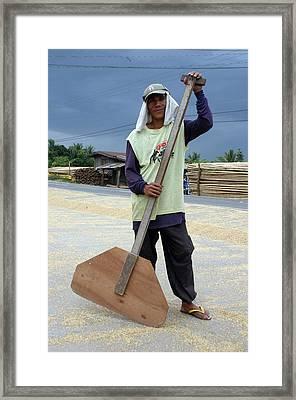 Rice Sorting Framed Print by Jez C Self