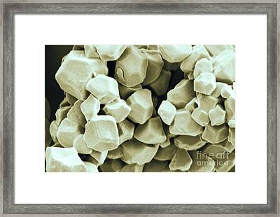 Rice Starch Granules Framed Print by Scimat