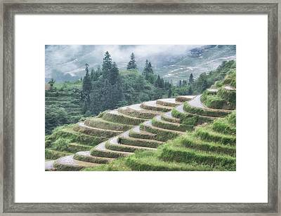 Framed Print featuring the photograph Rice Terraces by Wade Aiken