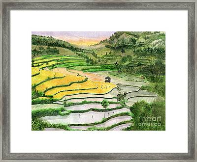 Ricefield Terrace II Framed Print by Melly Terpening