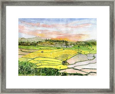 Ricefield Terrace Framed Print by Melly Terpening