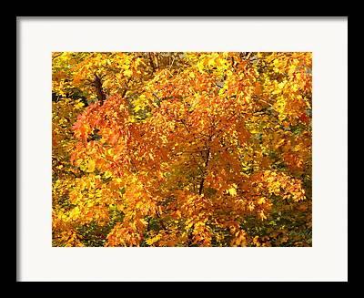Splendid Fall Colors Framed Prints