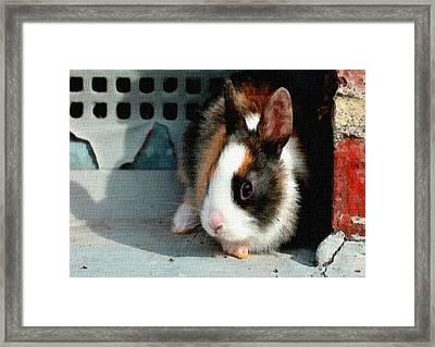 Richard Rabbit L B Framed Print