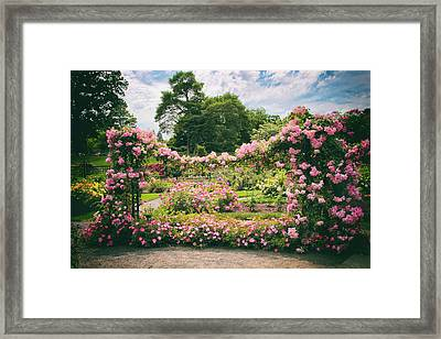 Riches Of Roses Framed Print by Jessica Jenney
