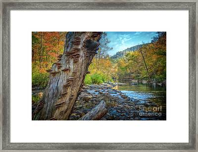 Richland Creek Framed Print by Larry McMahon